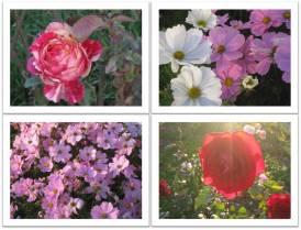 jardin-de-bagatelle_2