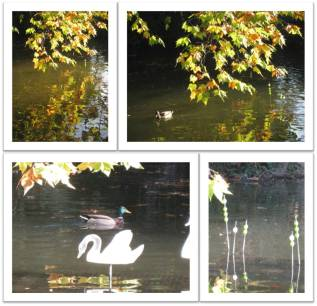 mare-aux-canards_1