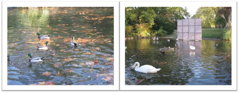 mare-aux-canards_3