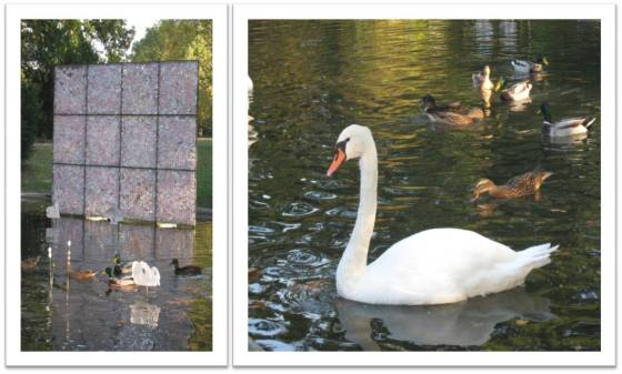 mare-aux-canards_4