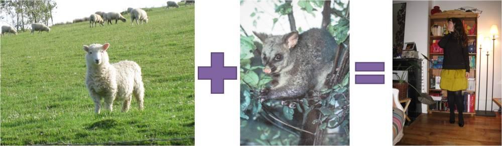 Lorsqu'un mouton croise un opossum ça fait un pull